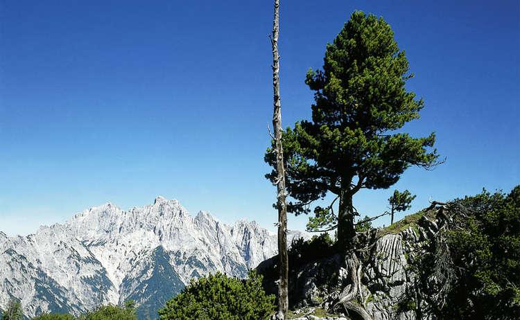 Baum Im Nationalkpark