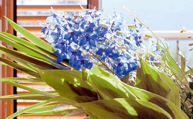 Blumen Muttertag 1